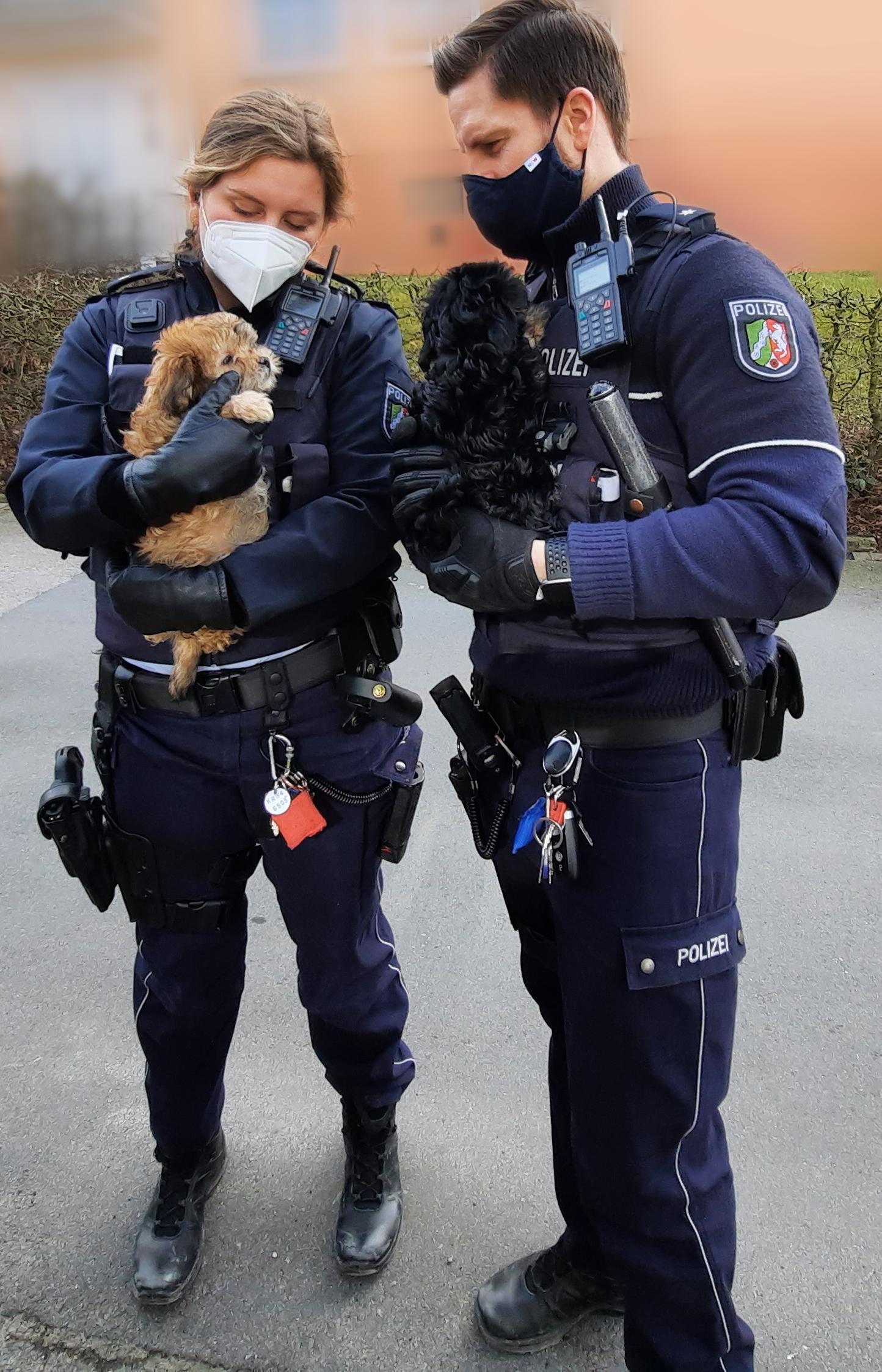 Polizei Welpenhandel